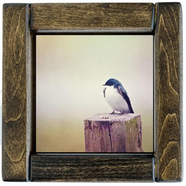 Barn Swallow Framed