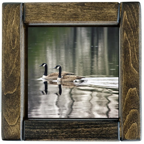 Swimmng Geese Framed