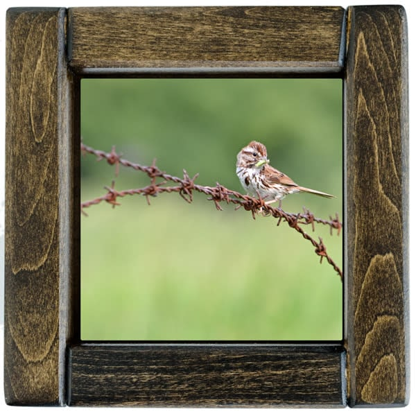 Sparrow Framed