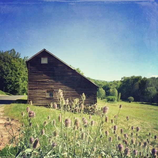 Saltbox Barn with Teasel Image