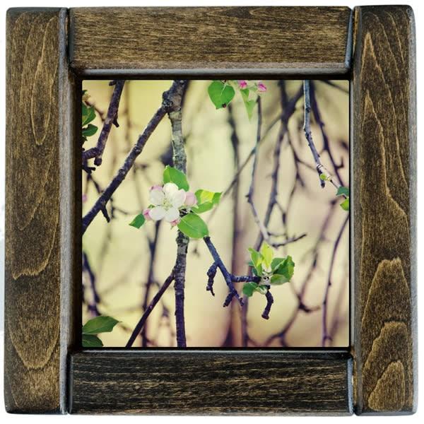 Apple Blossoms Framed