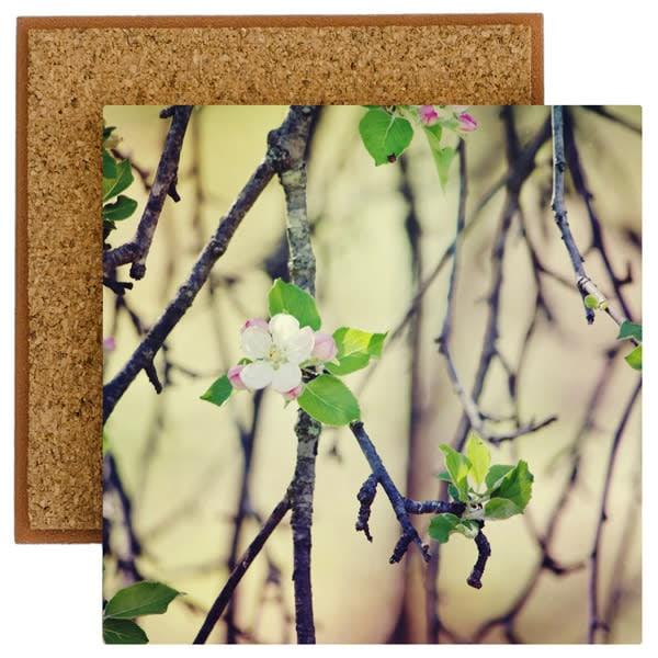 Apple Blossoms Photo Tile