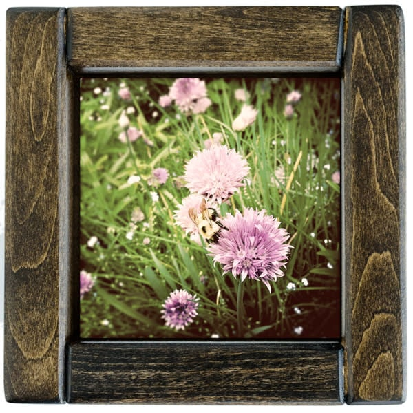 Chive Blossoms with Bumblebee Framed