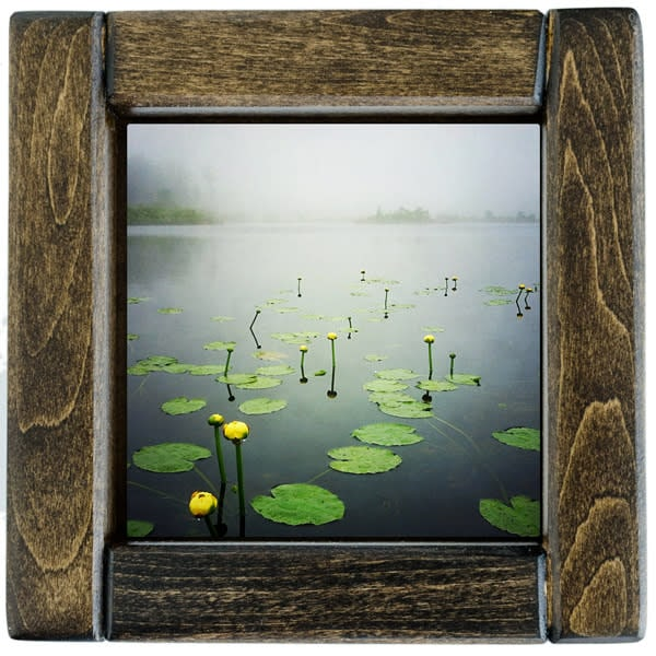 Water Lillies Framed