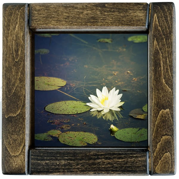 Water Lily Blossom Framed