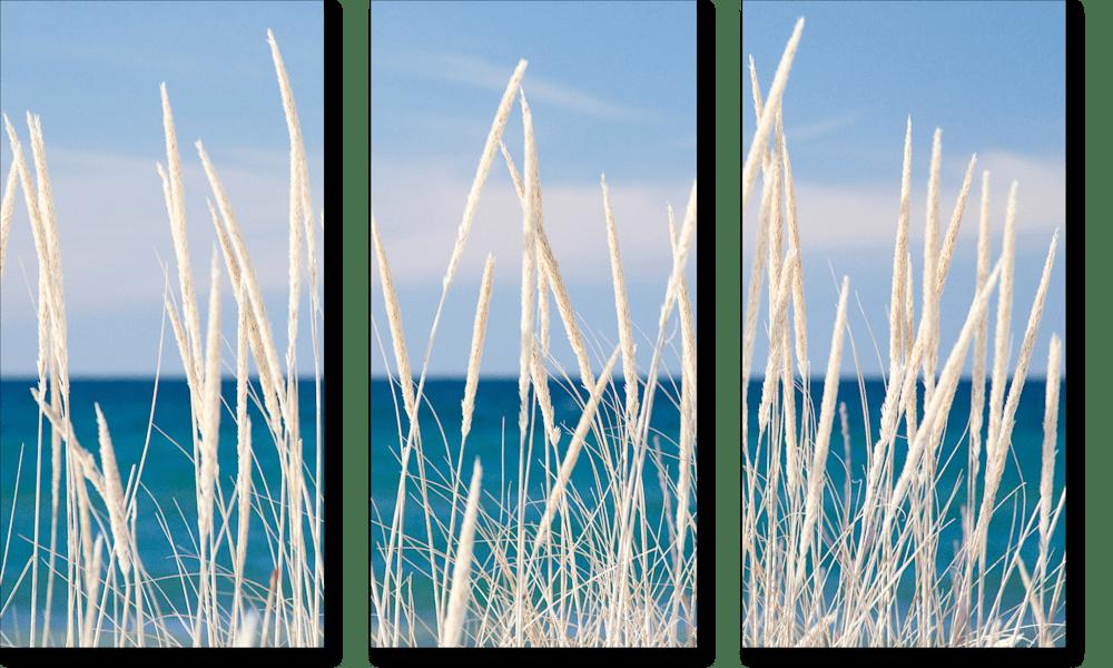 Winter Bleached Marram Grass Triptych