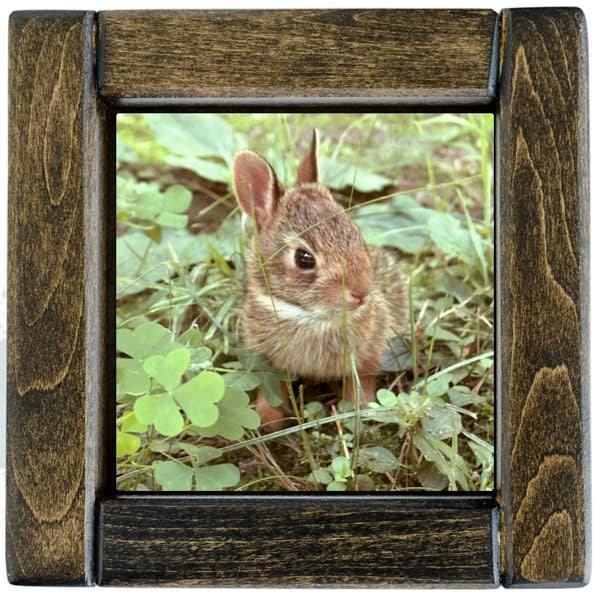 Baby Bunny Framed