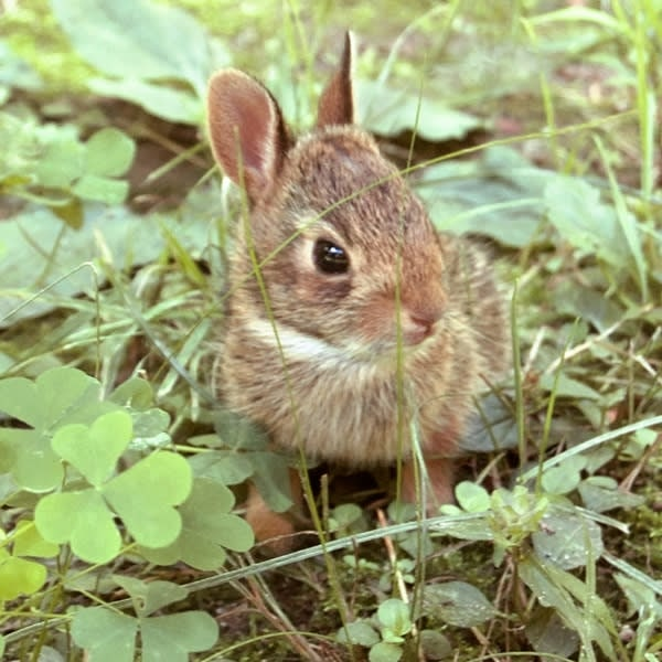 Baby Bunny Rabbit Image