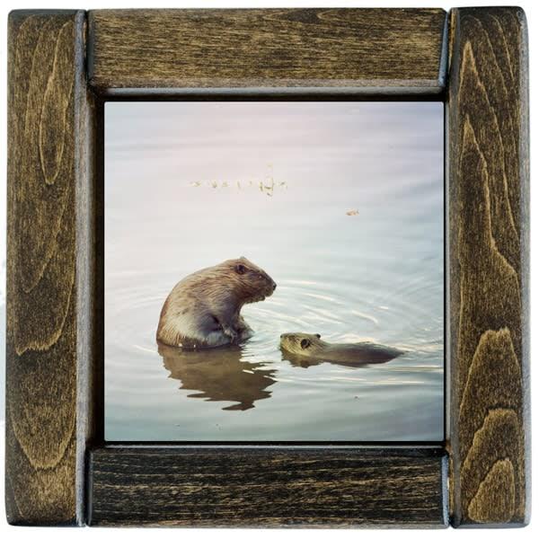Beavers Framed
