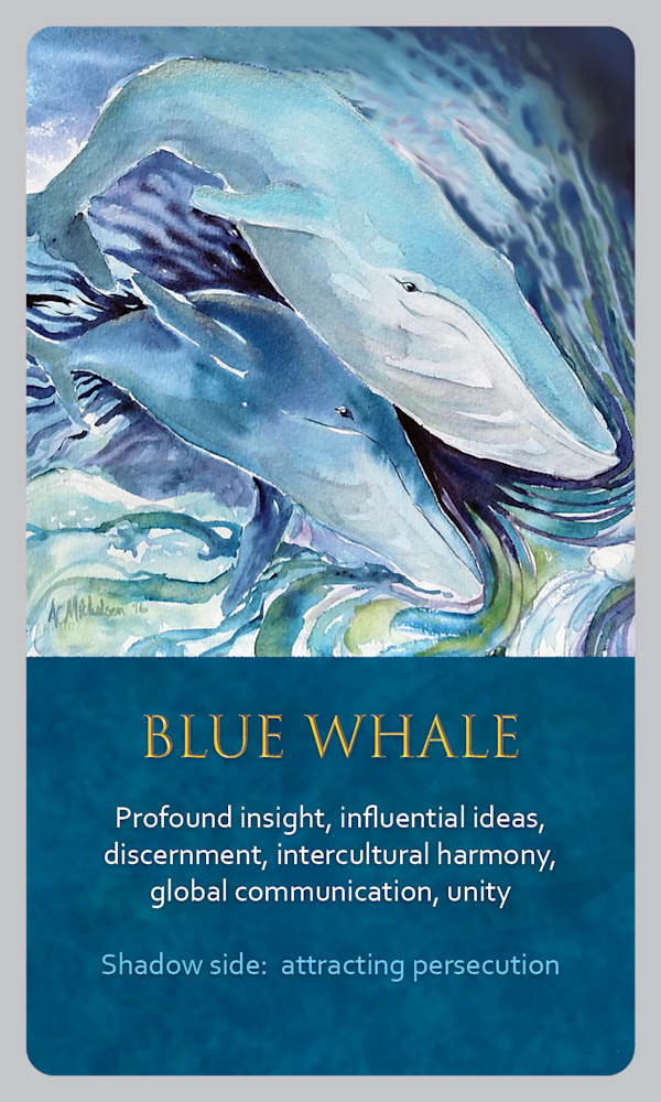 Whale spirit animal card image