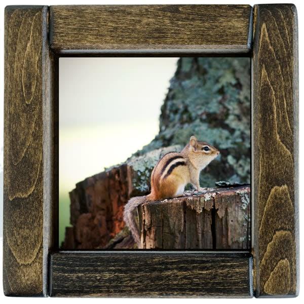 Chipmunk Framed
