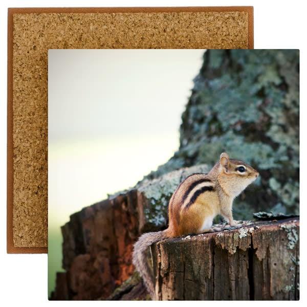 Chipmunk Photo Tile