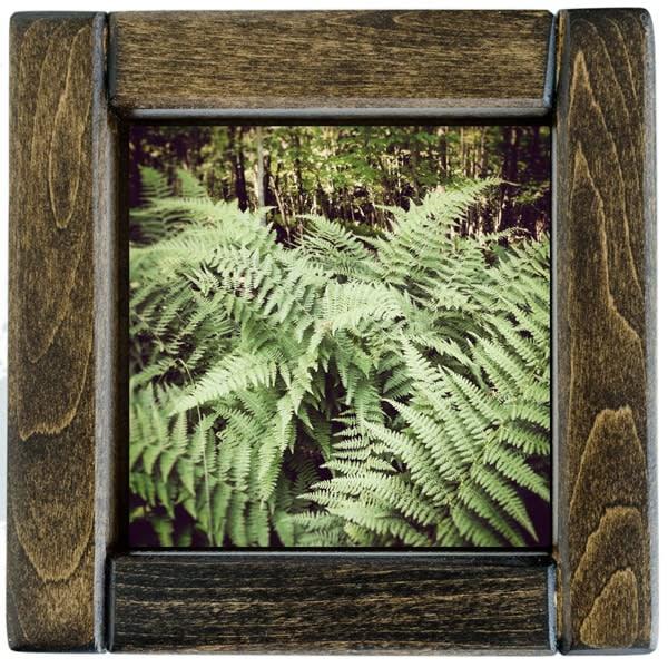 Ferns Framed
