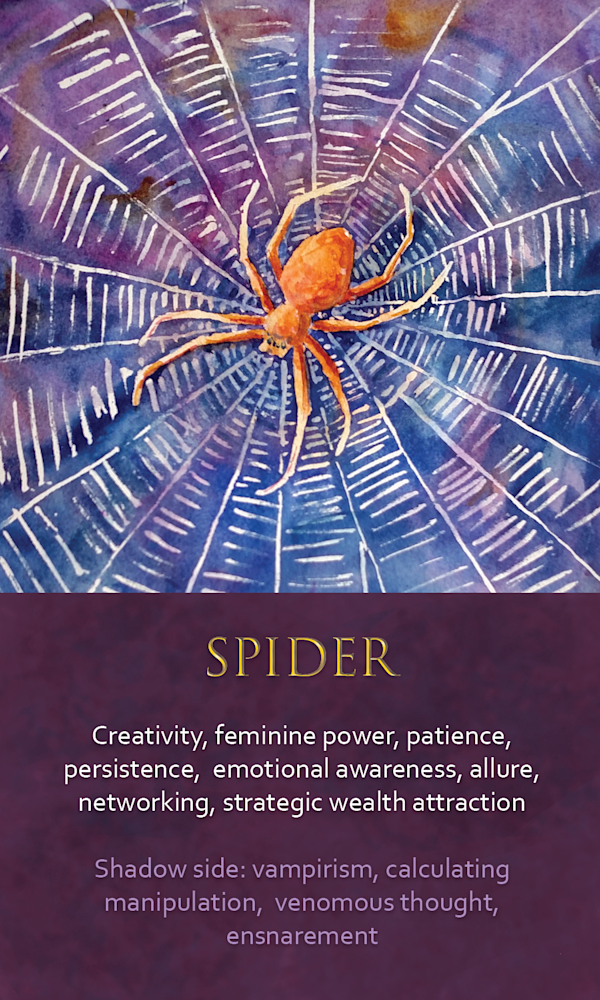 26 Spirit Animal Oracle Card Spider