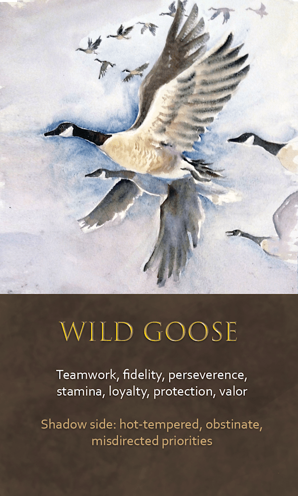 23 spirit animal oracle card Wild goose