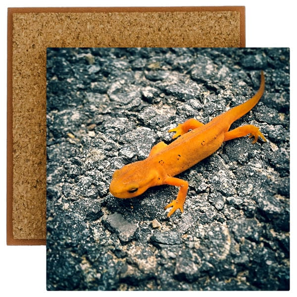 Red Eft Photo Tile