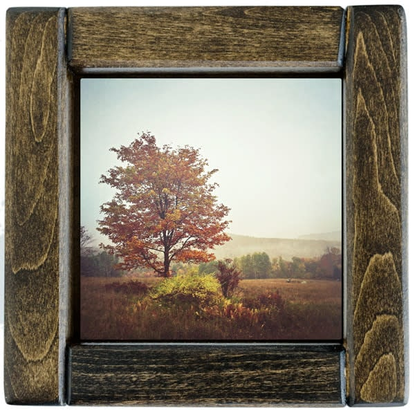 autumn tree framed