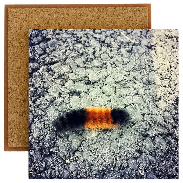 wooly bear photo tile
