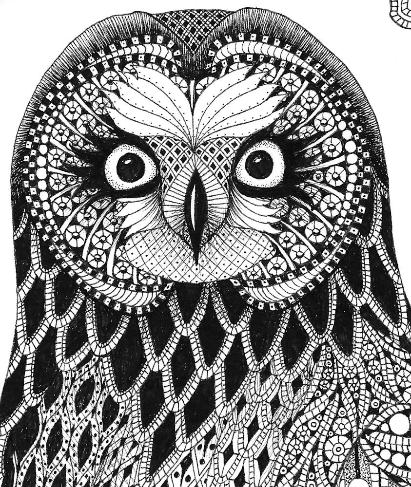 Short ear owl  detail