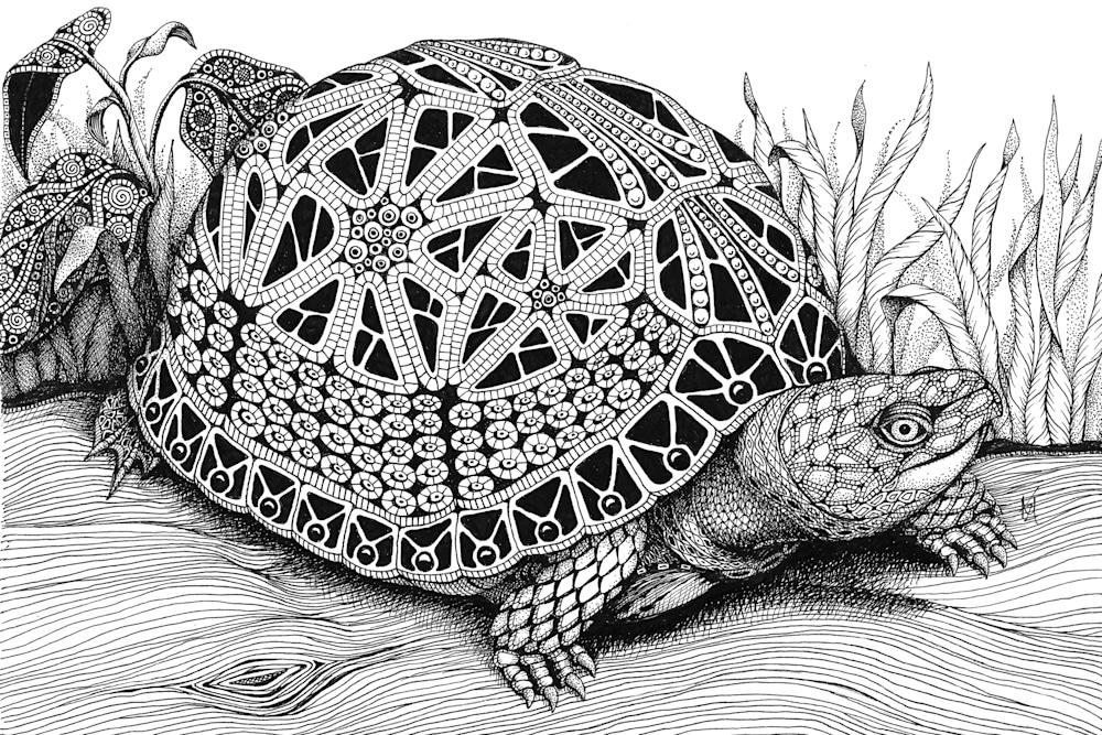 turtle  box turtle