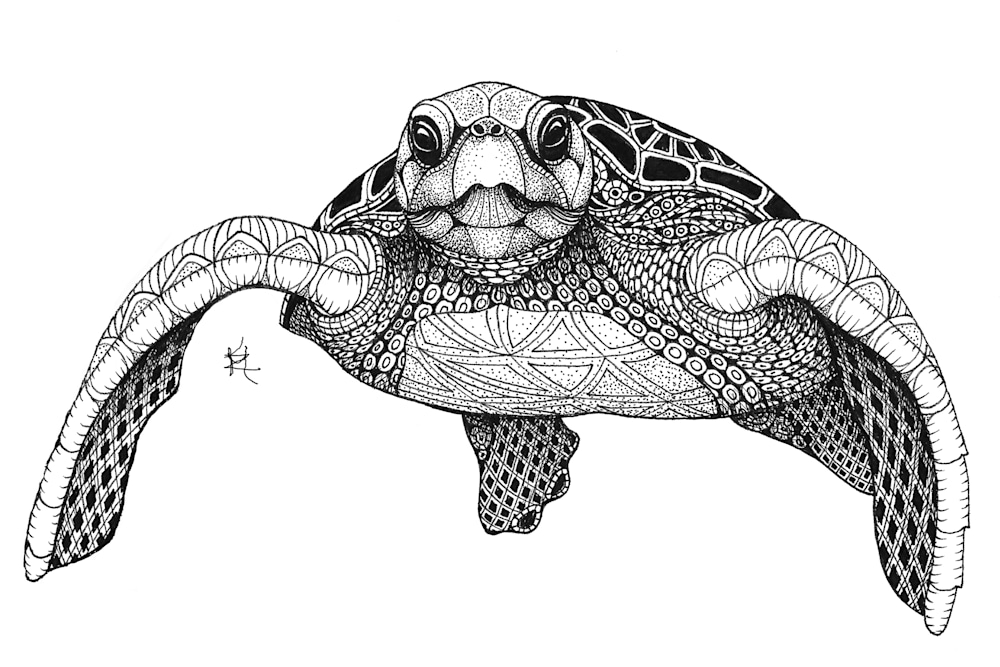 sea turtle front