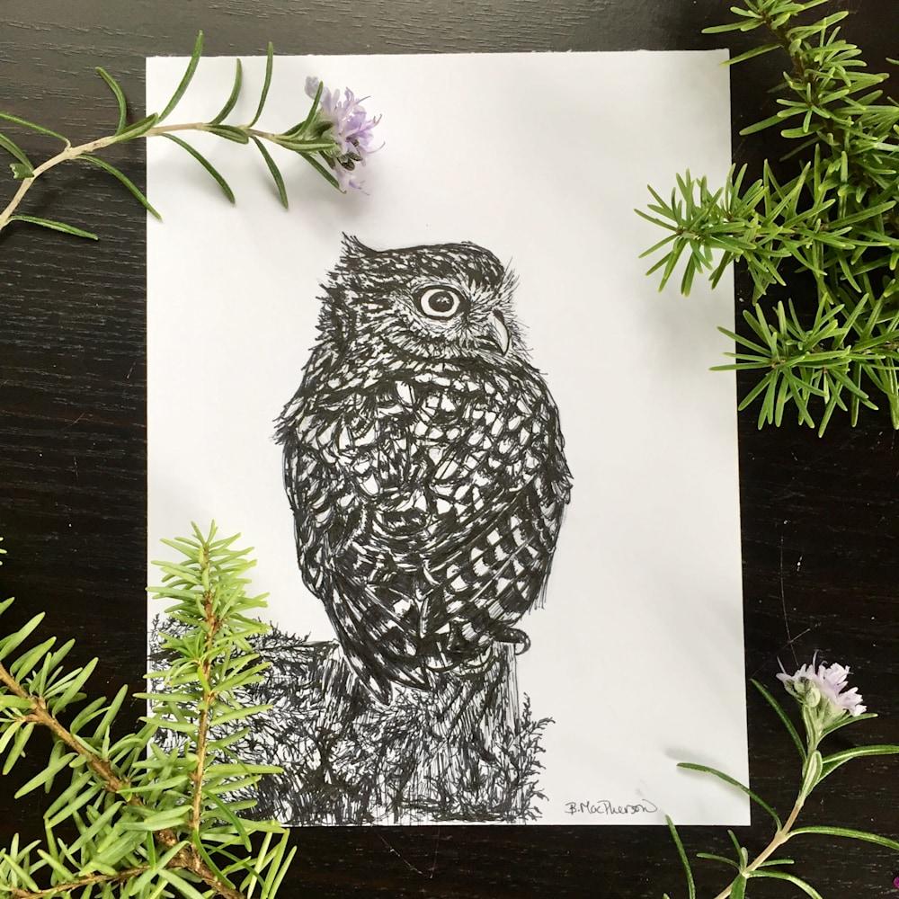 Wee Owl Display