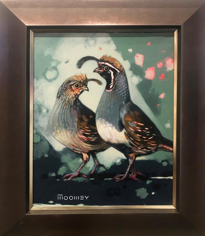moomey gambels quail