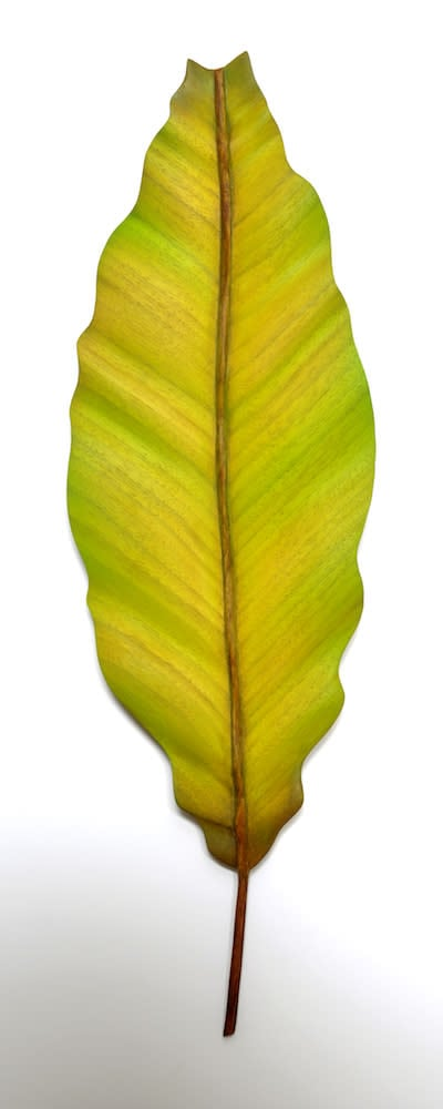 Lehti7