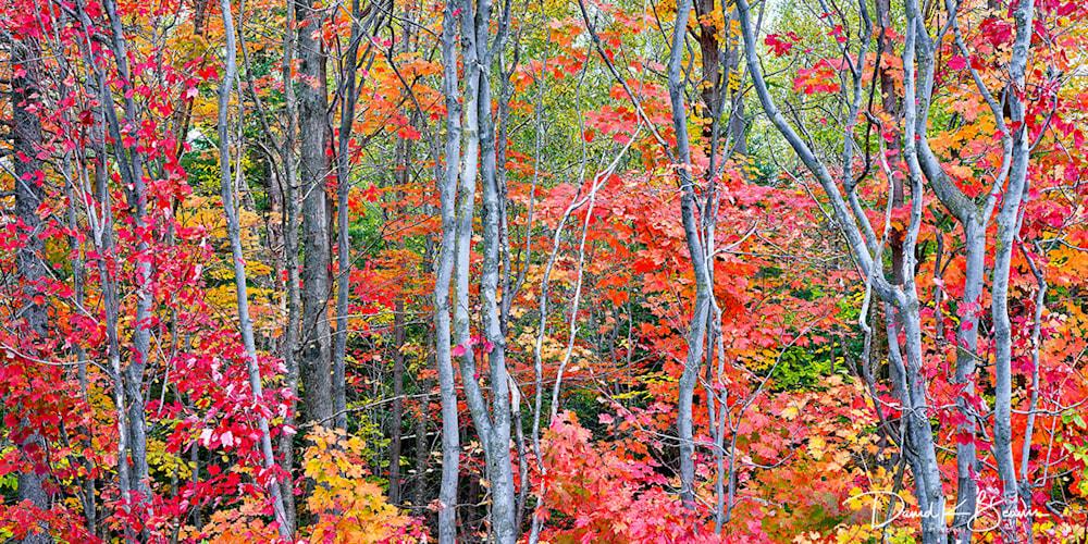 Autumn Blaze Pano r4sp1w