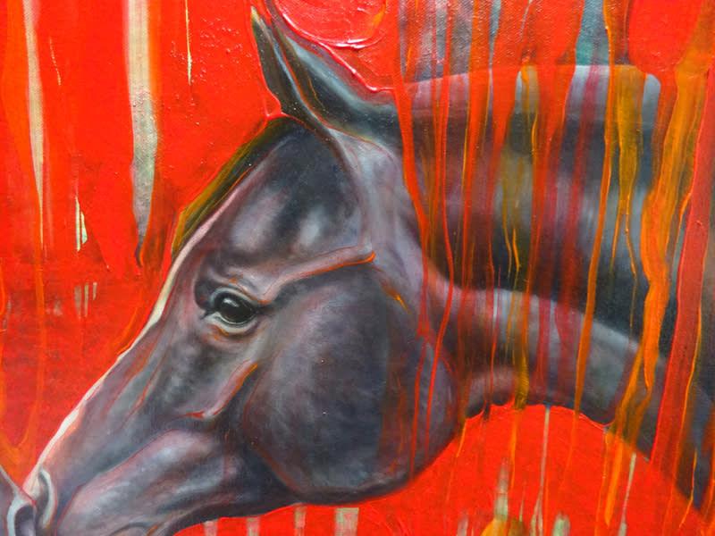 the horse dreamer d3 S