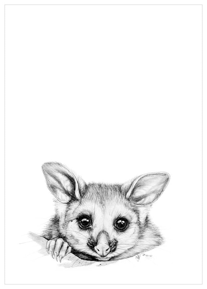 Possum   Pencil Drawing Print Files   A4