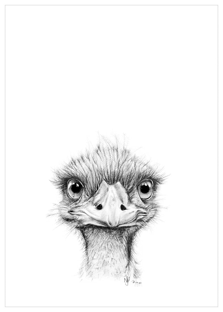Emu   Pencil Drawing Print Files   A4