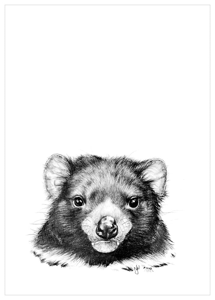 Tassie Devil   Pencil Drawing Print Files   A4