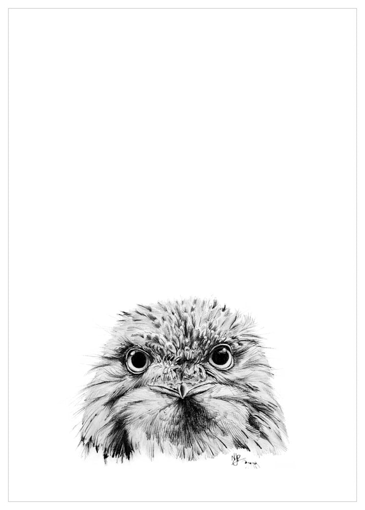 Tawny Frogmouth   Pencil Drawing Print Files   A4