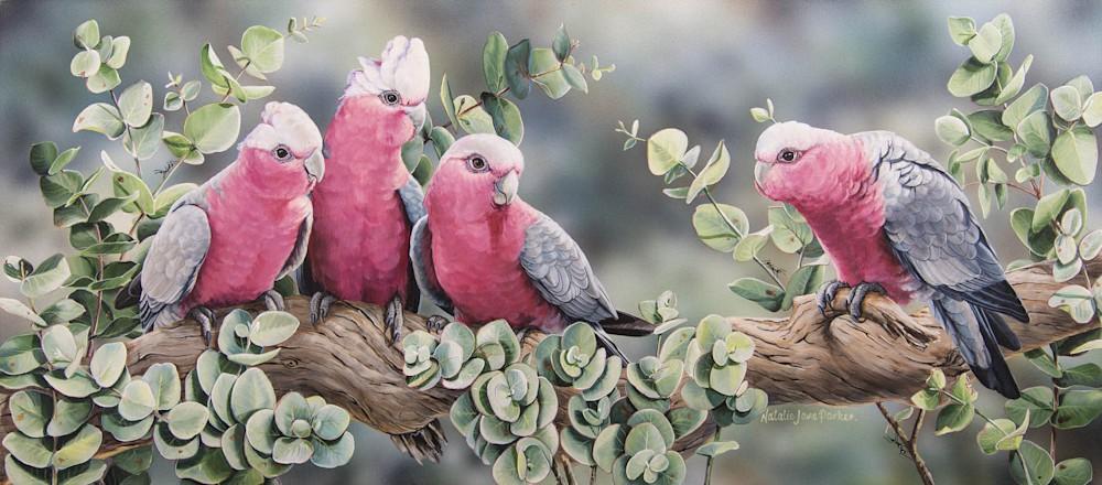 Silver Gum Galahs   Galahs In Silver Dollar Gum | Natalie Jane Parker | Australian Native Wildlife