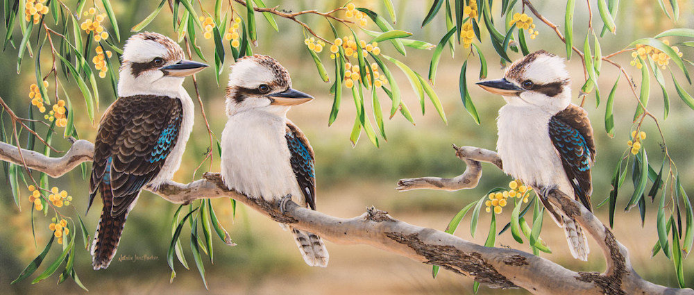 golden life kookaburras with golden wattle natalie jane parker