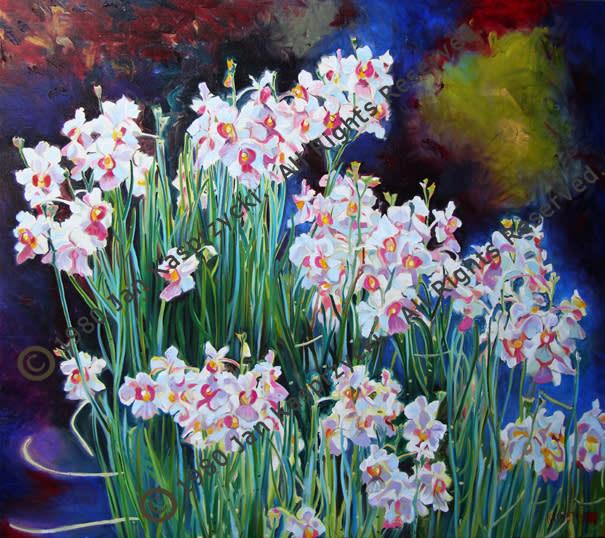 Vanda Orchids wC