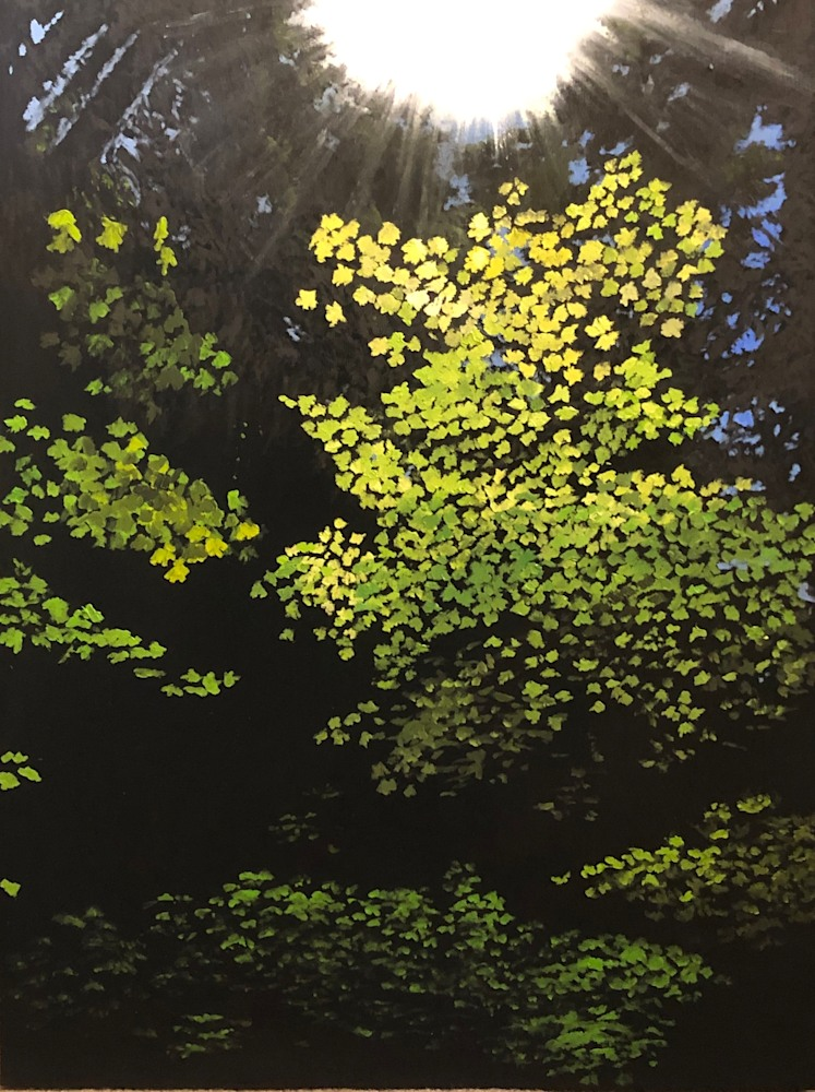 Sun Tree, State Forest 2019 WEB
