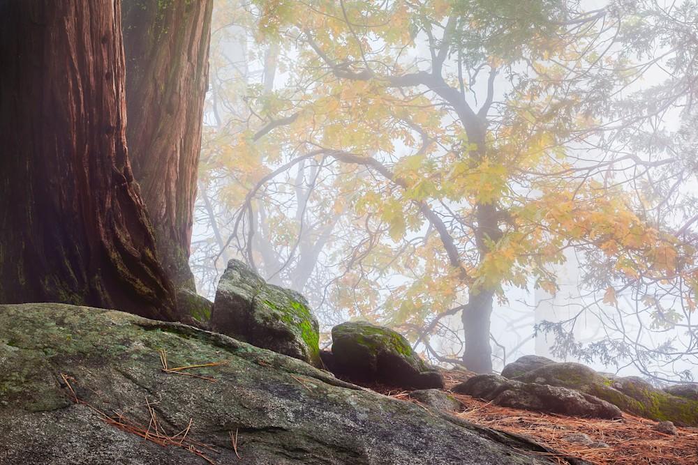 Fall Whisper