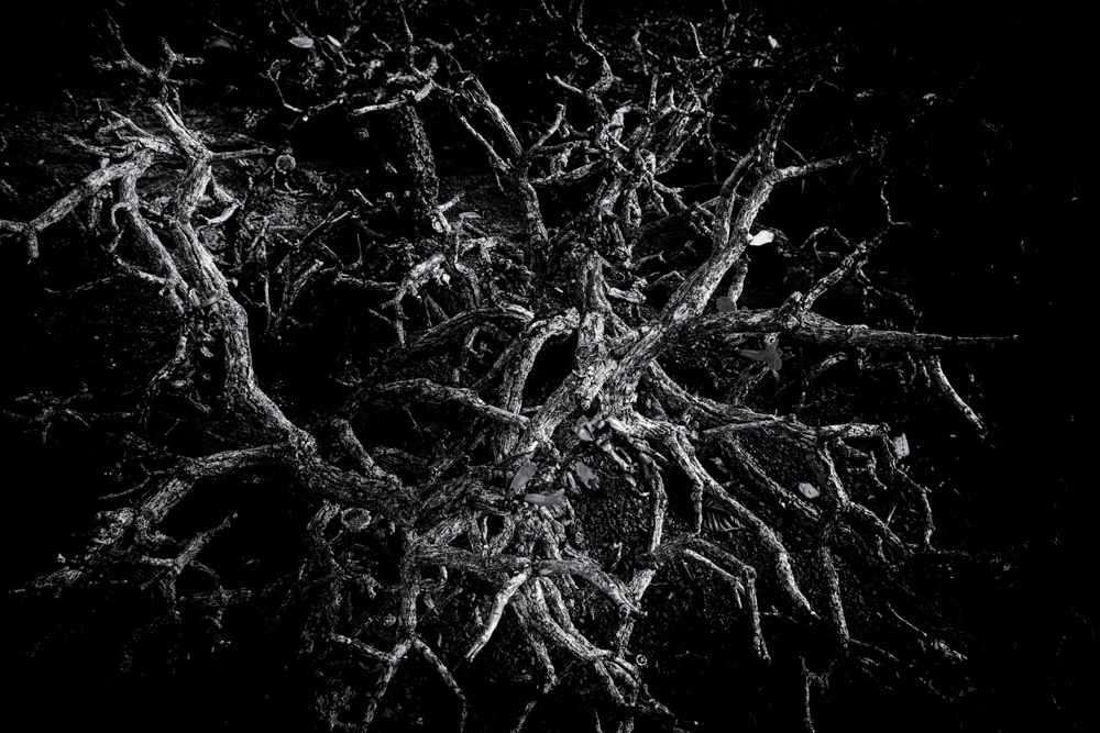 Tree #1 LE