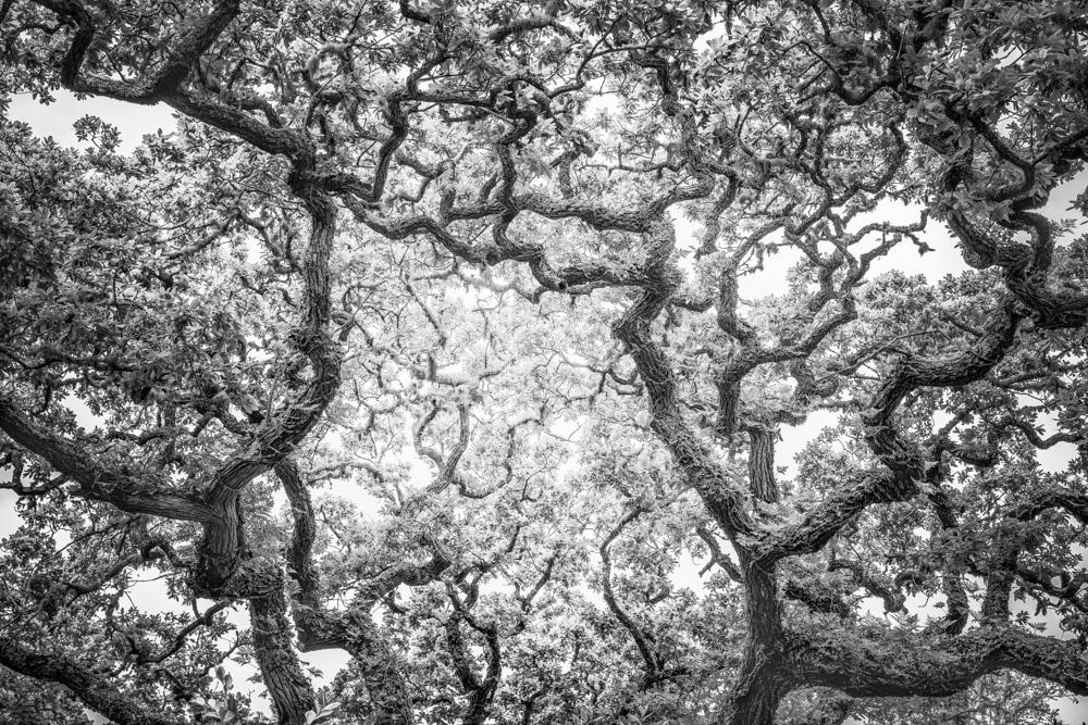Tree #3a LE