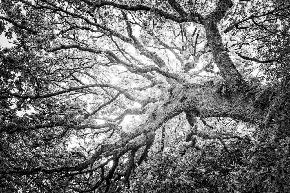 Tree #4b LE