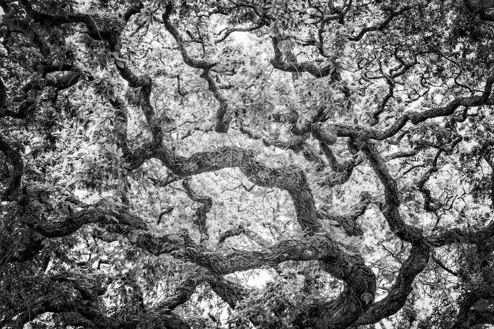 Tree #5 LE