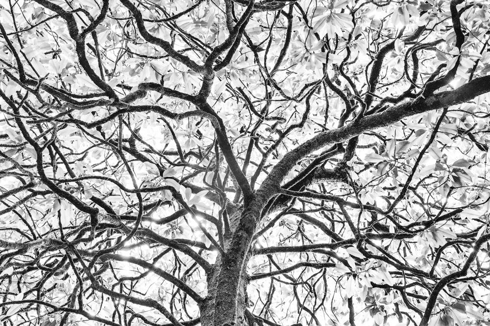 Tree #69 LE