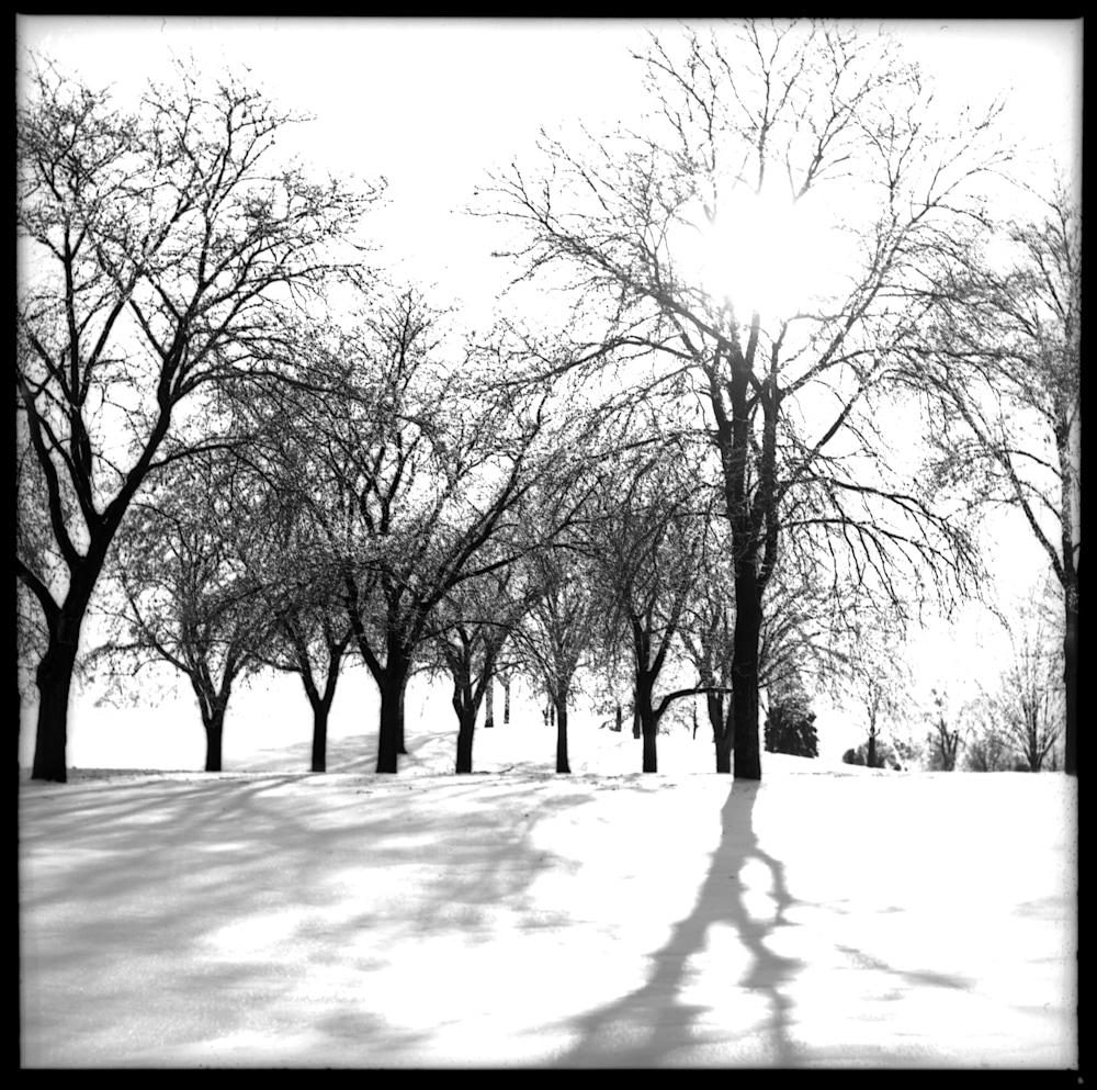 Lakewood Trees