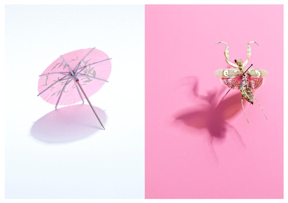 Umbrella Bug
