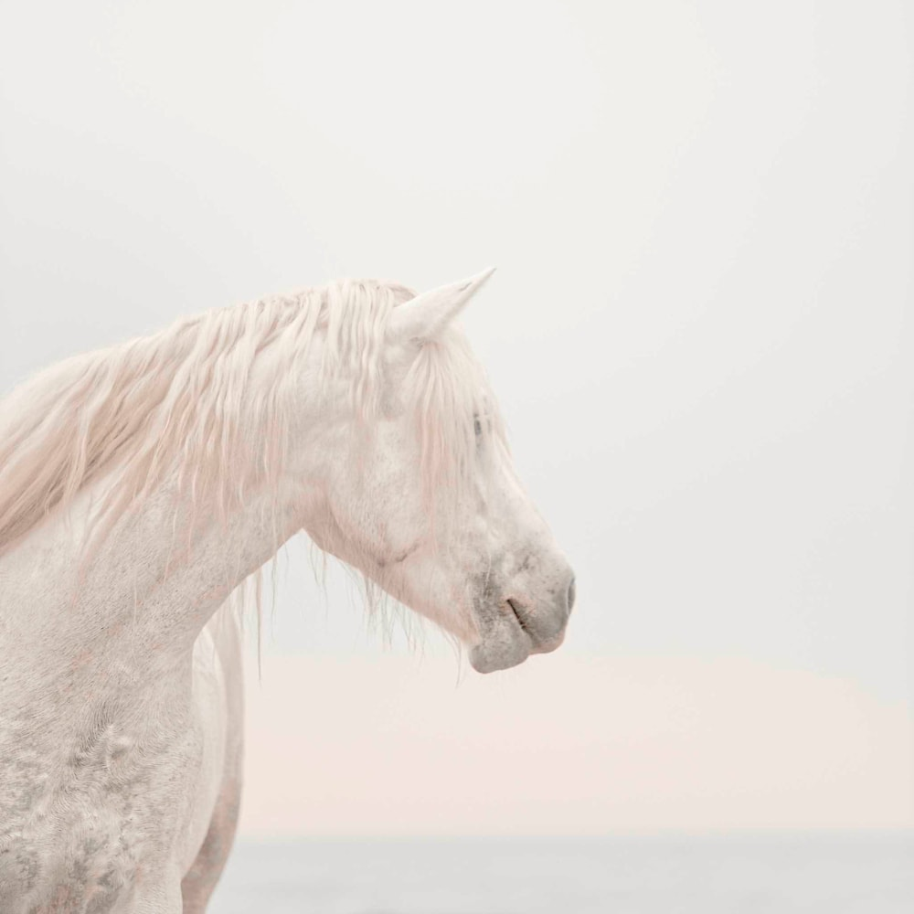 Unicorns Do Exist Low Res