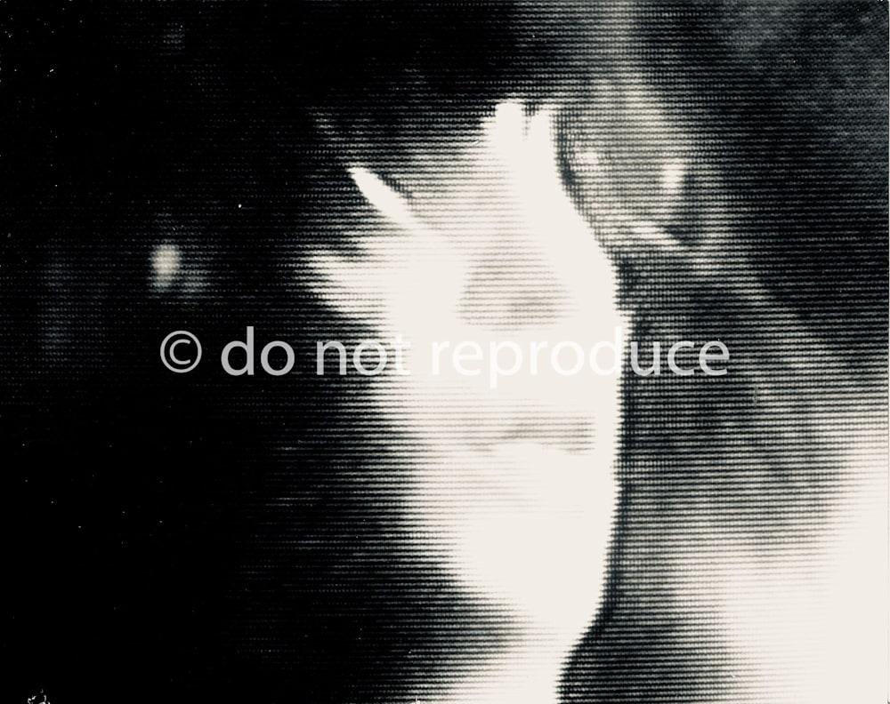 Joey Ramone @ CBGB 1978