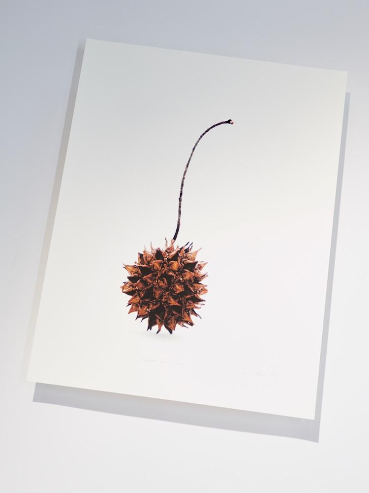 seed print