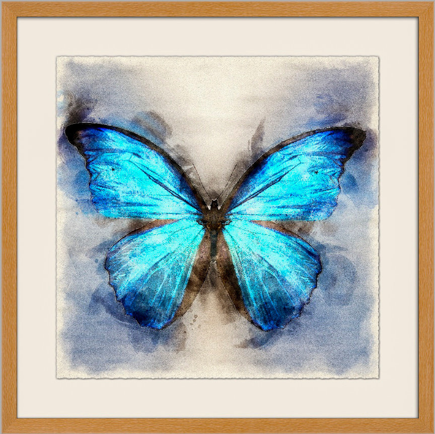 Bluest Butterfly Llimited Edition 1080